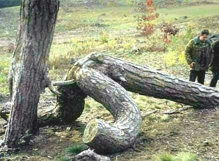 trees are doing it like humans 2