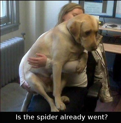 Is the spider already went